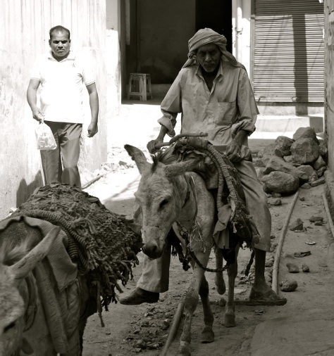 And gadhas....the man on the donkey thought I was crazy, taking a picture of him and his beast of burden