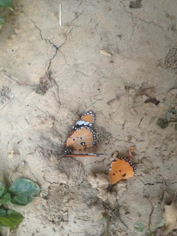 After one hour of watching the ants do their job...Mumma, cheentiyo ne apna khaana le liya, ab phir se butterfly ki photo lo na!