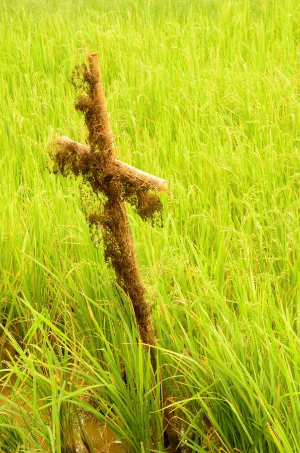 From a Catholic's fields, but then rice feeds everyone, right? :)