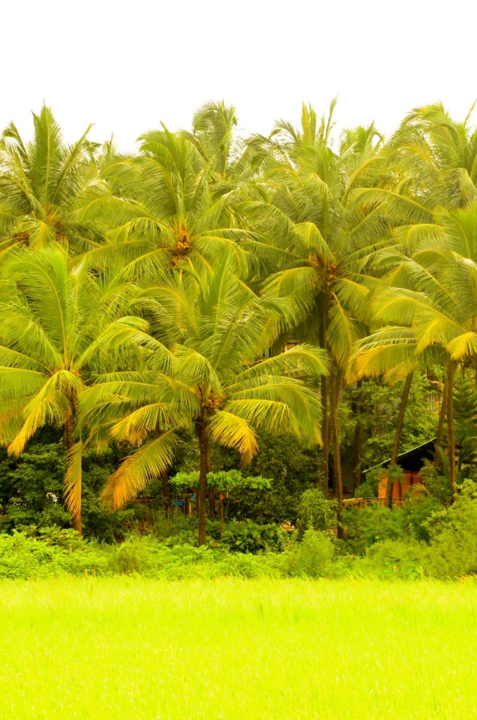 Goa's Green, a salve for the soul!