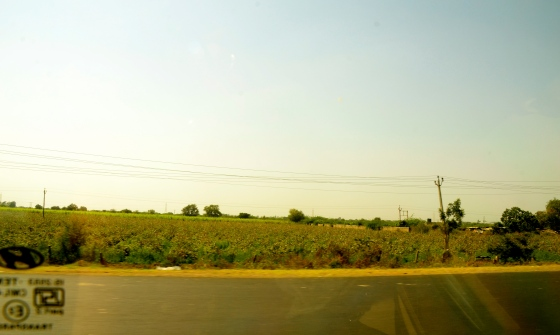 Endless fields on the superb drive from Vadodara to Amdavad
