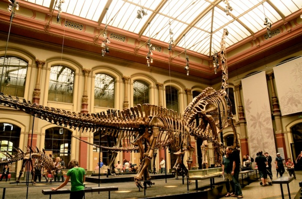 Ancient dinosaurs in a heritage building made for a killer combo!
