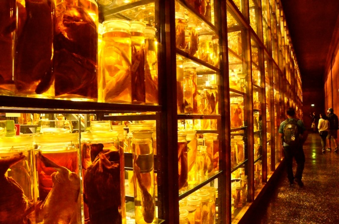 Rows and rows of creatures in bottles, not for the faint-hearted!