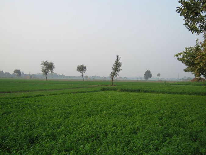 800px-Green_farms_of_Jats_in_Haryana