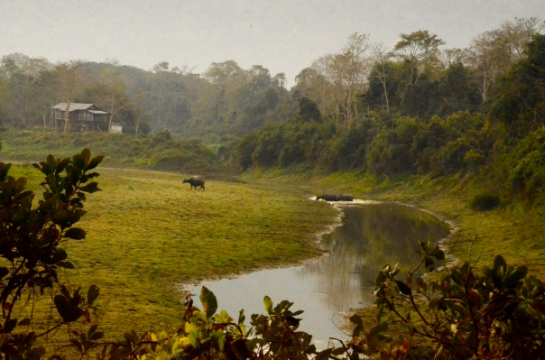 We drive on. At one point, we see wild buffalo cross a stream. Slow and lumbering. Free...