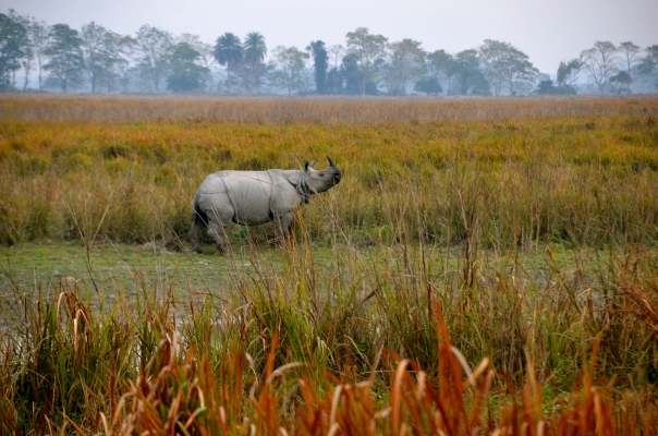 We enter rhino country and soon after, we spot our first rhino