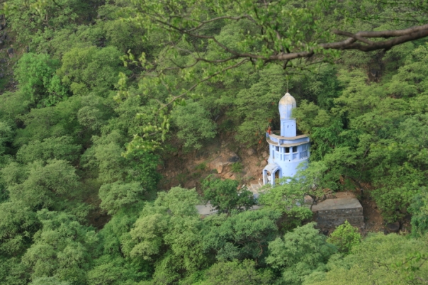 Mangar Bani is an untouched part of the Aravallis, revered and protected by local communities and a glimpse into what this habitat could be if we were to think ecologically smart!